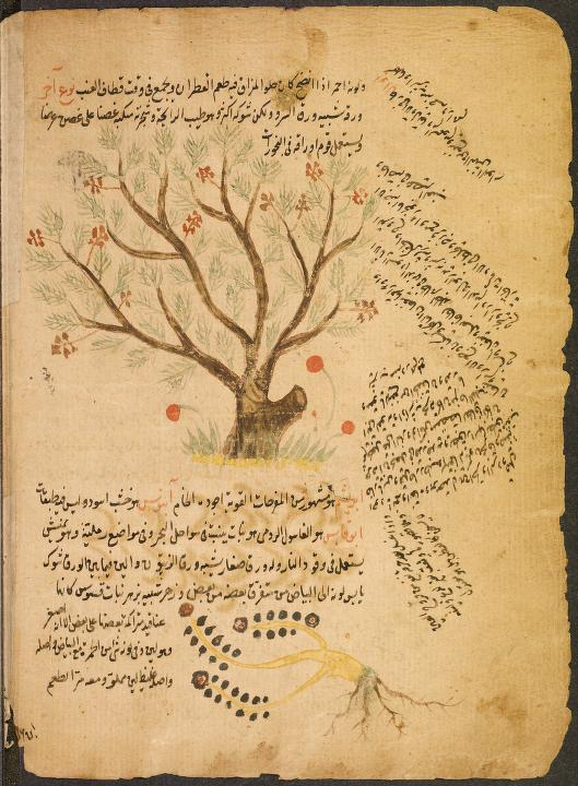 1-Arabic_botanical_treatise_L1