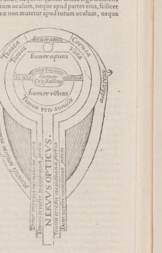 diagram of the Eye 1572